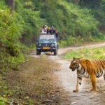 Jungle safari-corbett-national-park-go