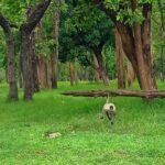 langoor-pench-national-park