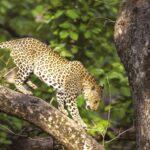 wildlife-corbett-national-park-goL
