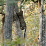 Pench National Park - MPT